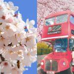 Festival musim semi di Korea