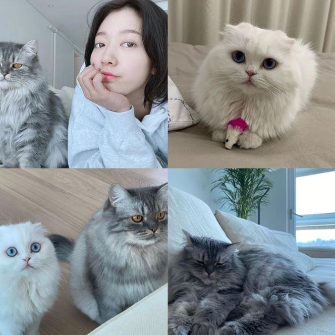 6 Aktris Korea Yang Sangat Mencintai Kucing Inikpop